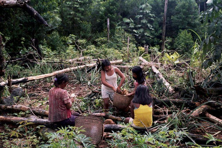 Territorios indígenas Colombia. Mujeres indígenas recogen alimentos en sus chagras. Foto: Stefan Ruiz, Fundación Gaia Amazonas.