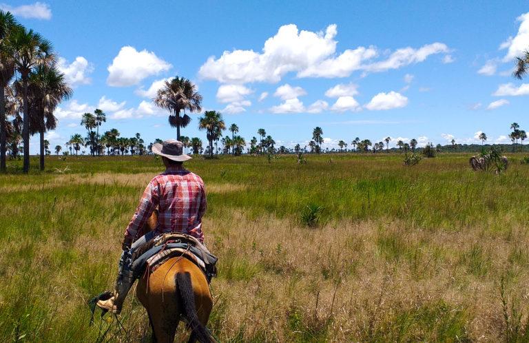 El hábitat de la paraba barba azul también es zona ganadera. Foto: Asociación Armonía.