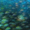 Peces de Cabo Pulmo
