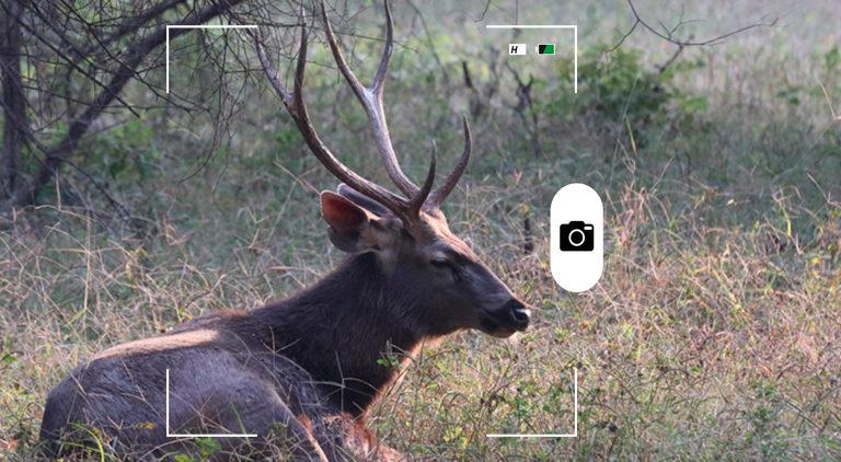 Composición de Mongabay Latam a partir de una foto de un ciervo sambar. Crédito: Rhett A. Butler / Mongabay