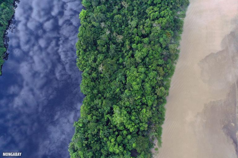 bosques tropicales amazonia