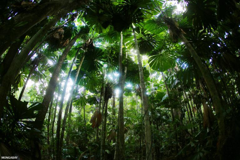 bosques tropicales australia