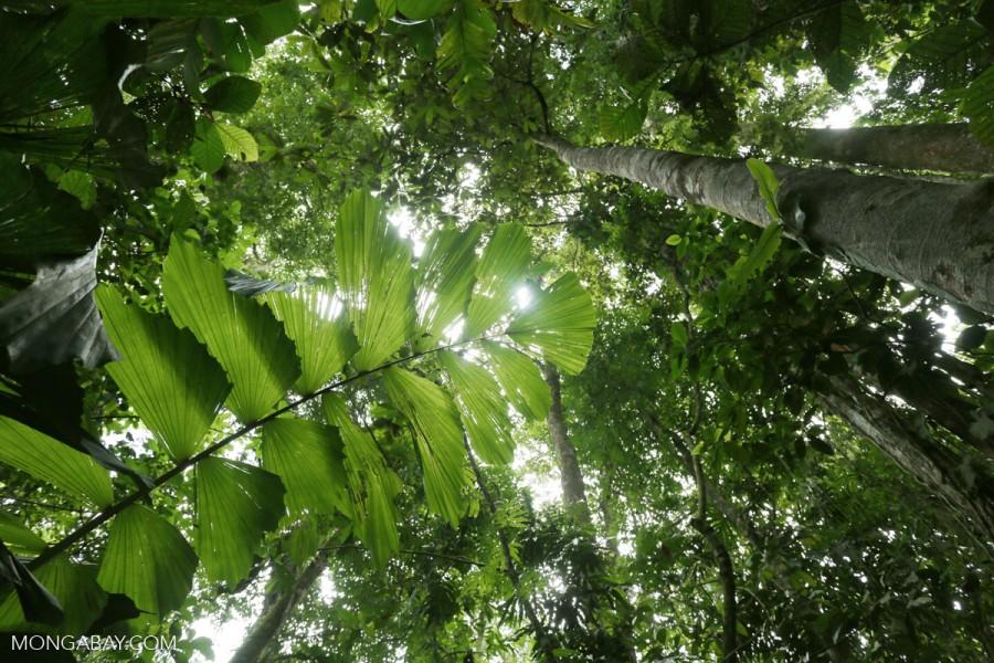 bosques tropicales costa rica