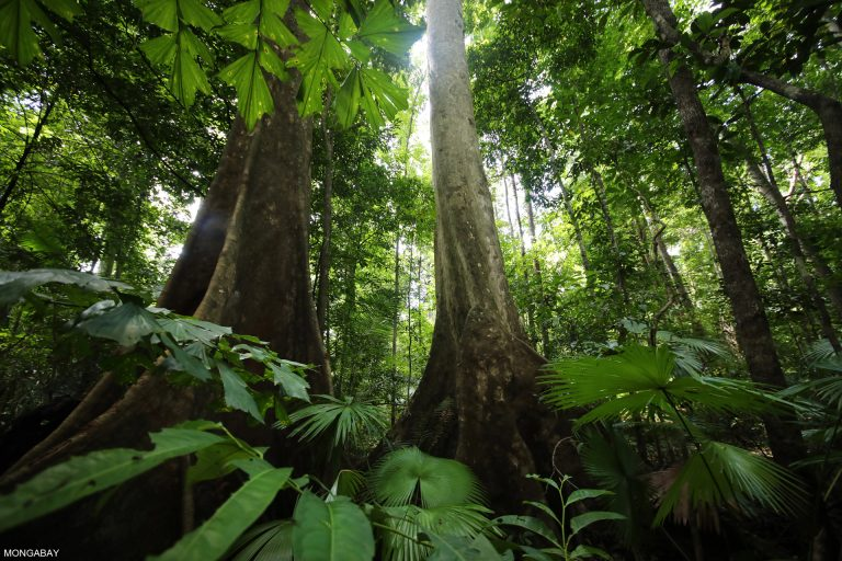 bosques tropicales indonesia