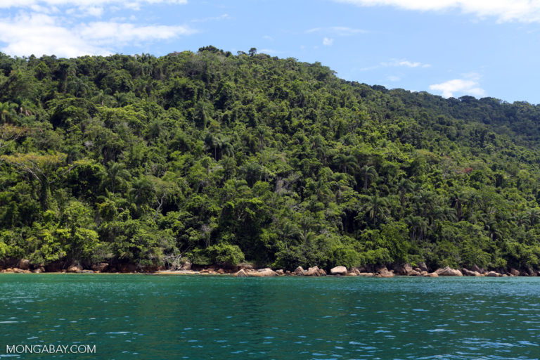 bosques tropicales brasil