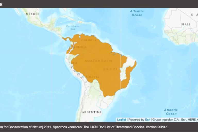 Mapa de distribución del perro de monte. Fuente: UICN.