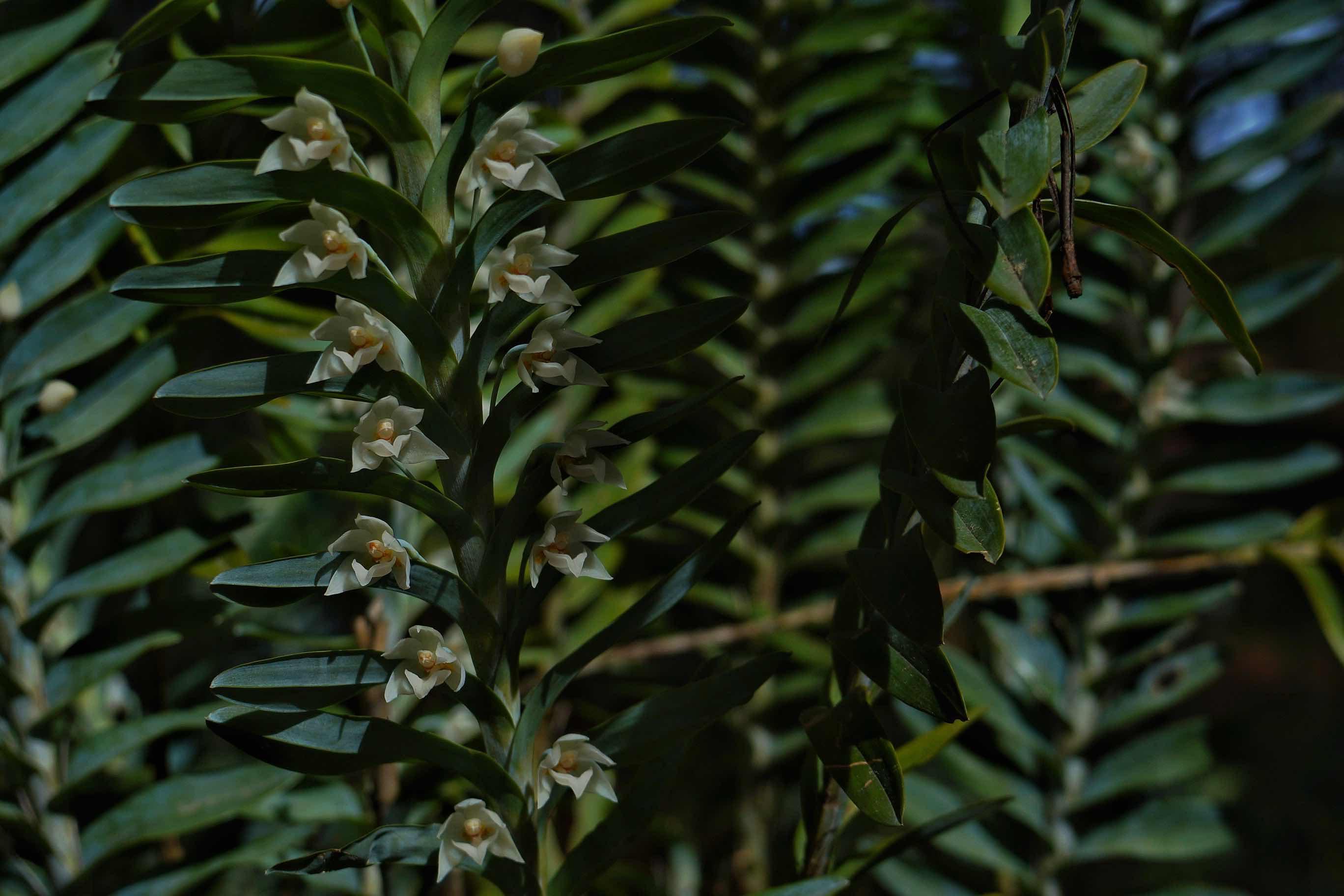 biodiversidad y manejo forestal-Ixtlán