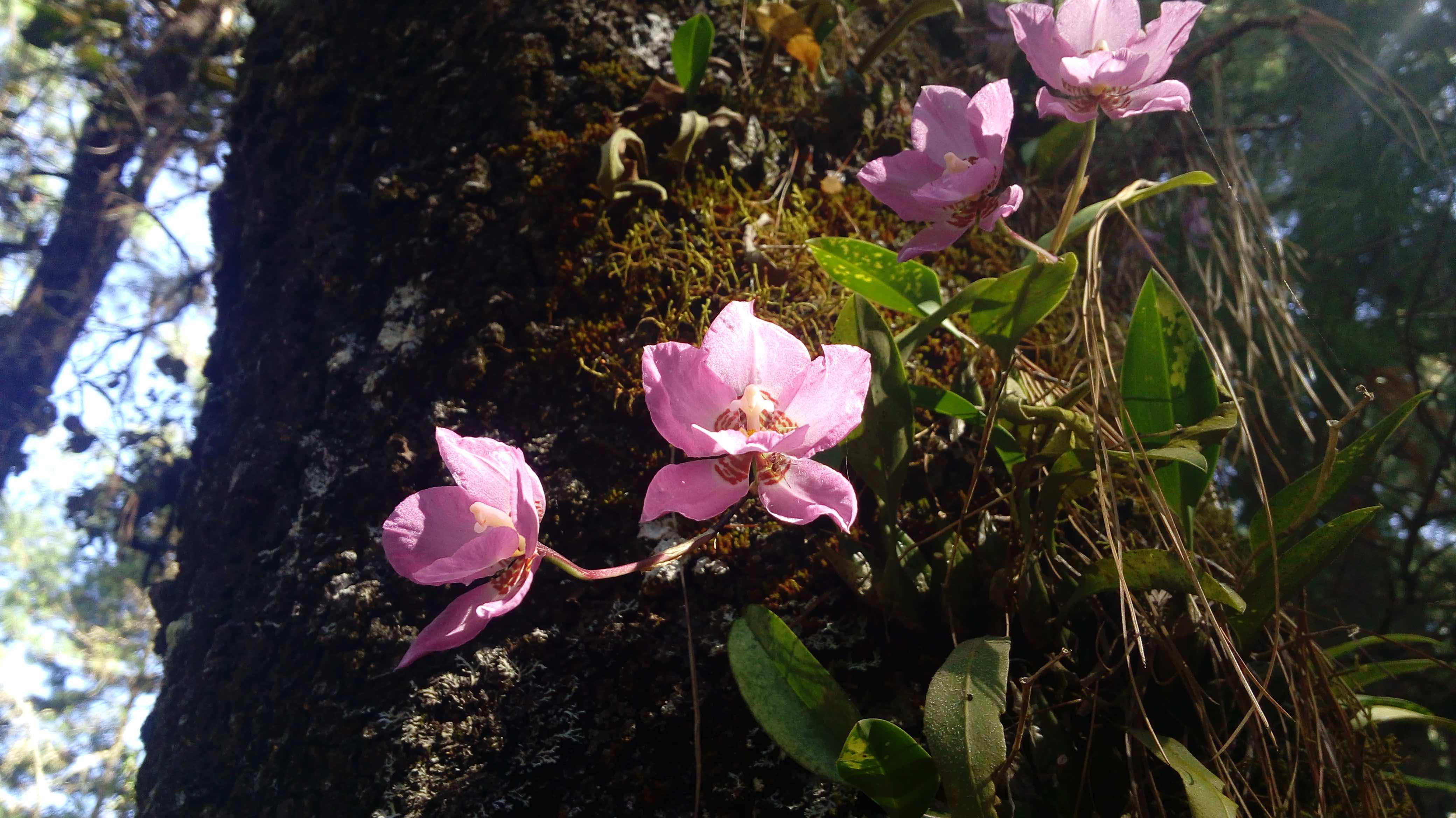 Orquídeas Ixtlan