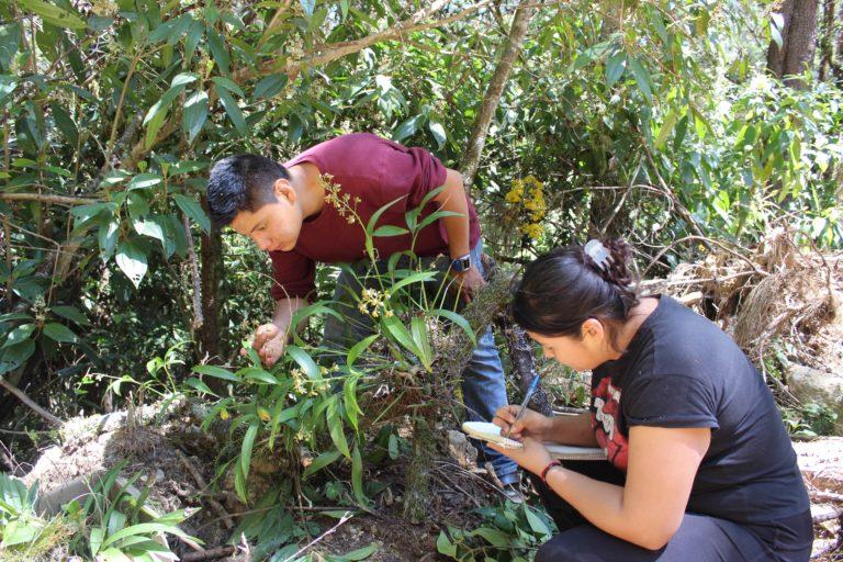 Orquideas en Ixtlán-Oaxaca-manejo forestal