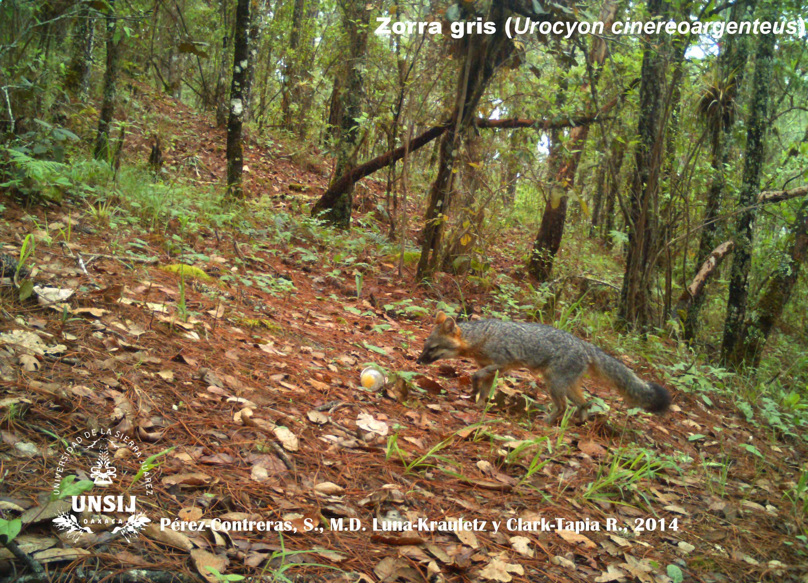Fauna de bosques comunitarios