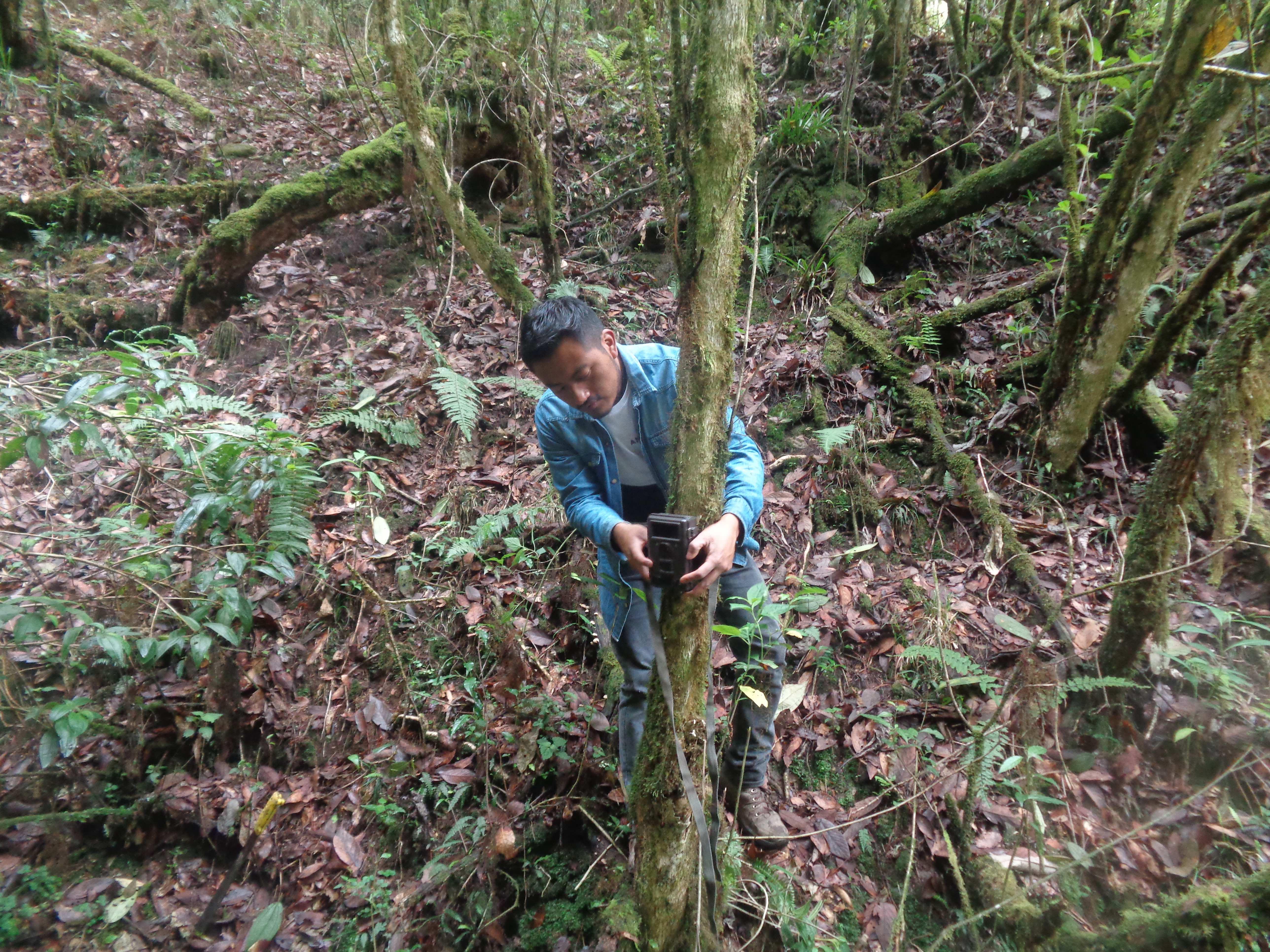 Cámaras trampa-bosques comunitarios