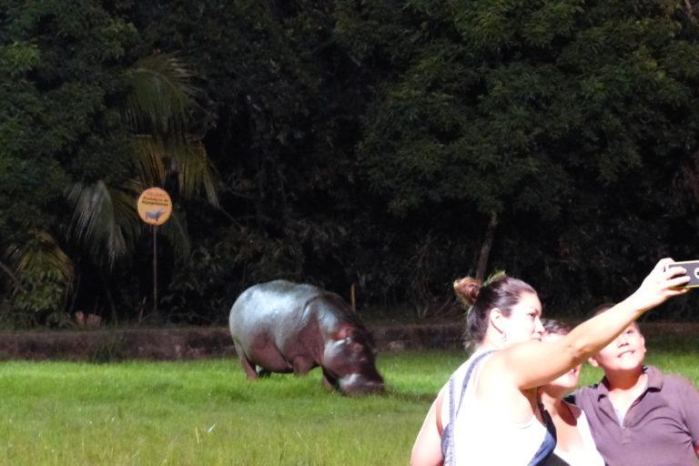 Hipopótamos en Colombia. En Doradal, Antioquia, los hipopótamos se han convertido en uno de los mayores atractivos turísticos. Foto: Juan F. Reatiga.