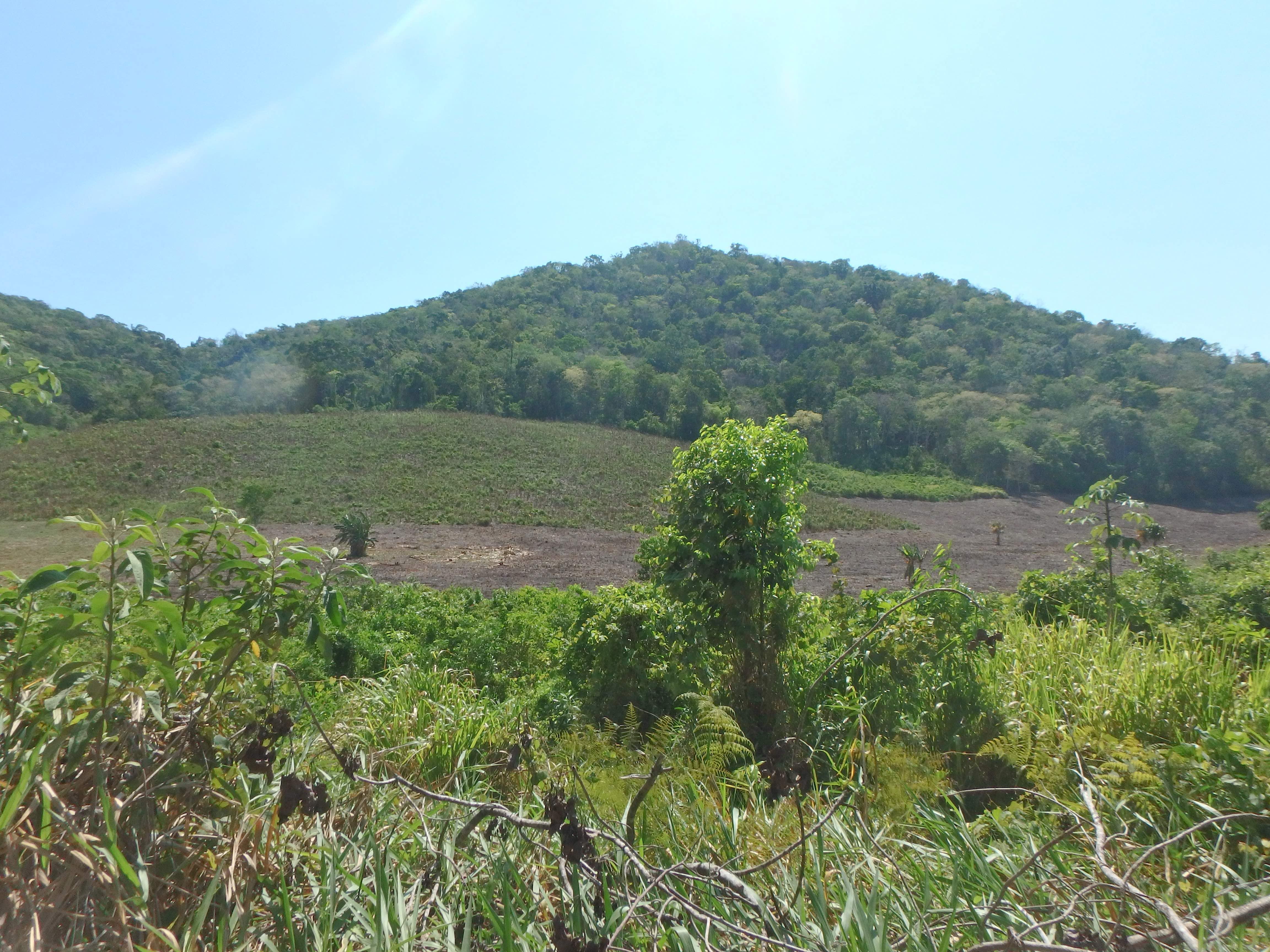 Deforestación Reserva de la Biosfera Maya