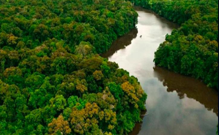 Los bosques amazónicos se redujeron en un 10% entre 1985 y 2018. Foto: MapBiomas.