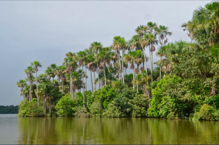 Más de 72 millones de hectáreas han sido deforestadas entre 1985 y 2018. Foto: MapBiomas.