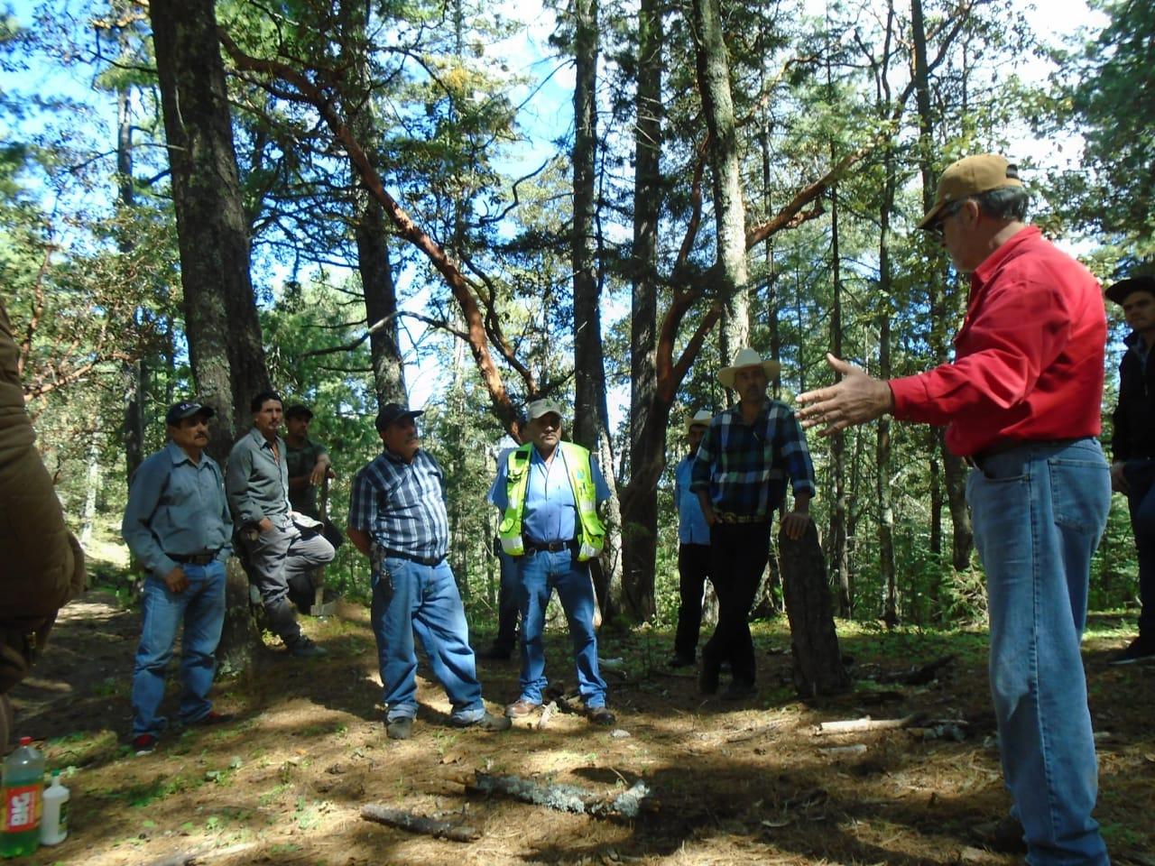 Manejo forestal en Durango