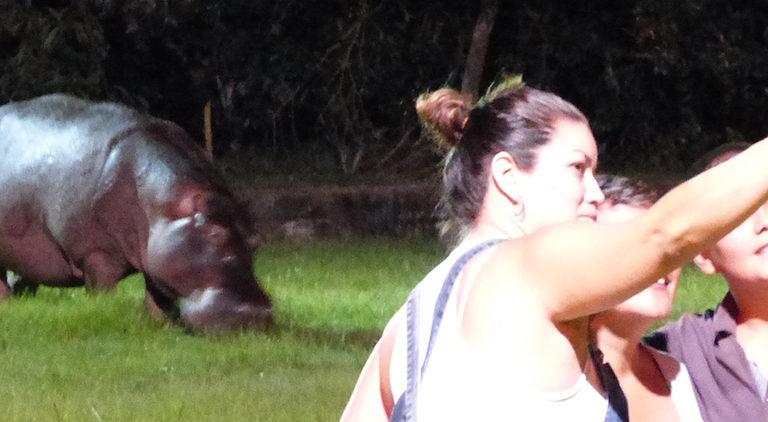 Detalle de foto. En Doradal, Antioquia, los hipopótamos se han convertido en uno de los mayores atractivos turísticos. Foto: Juan F. Reatiga.