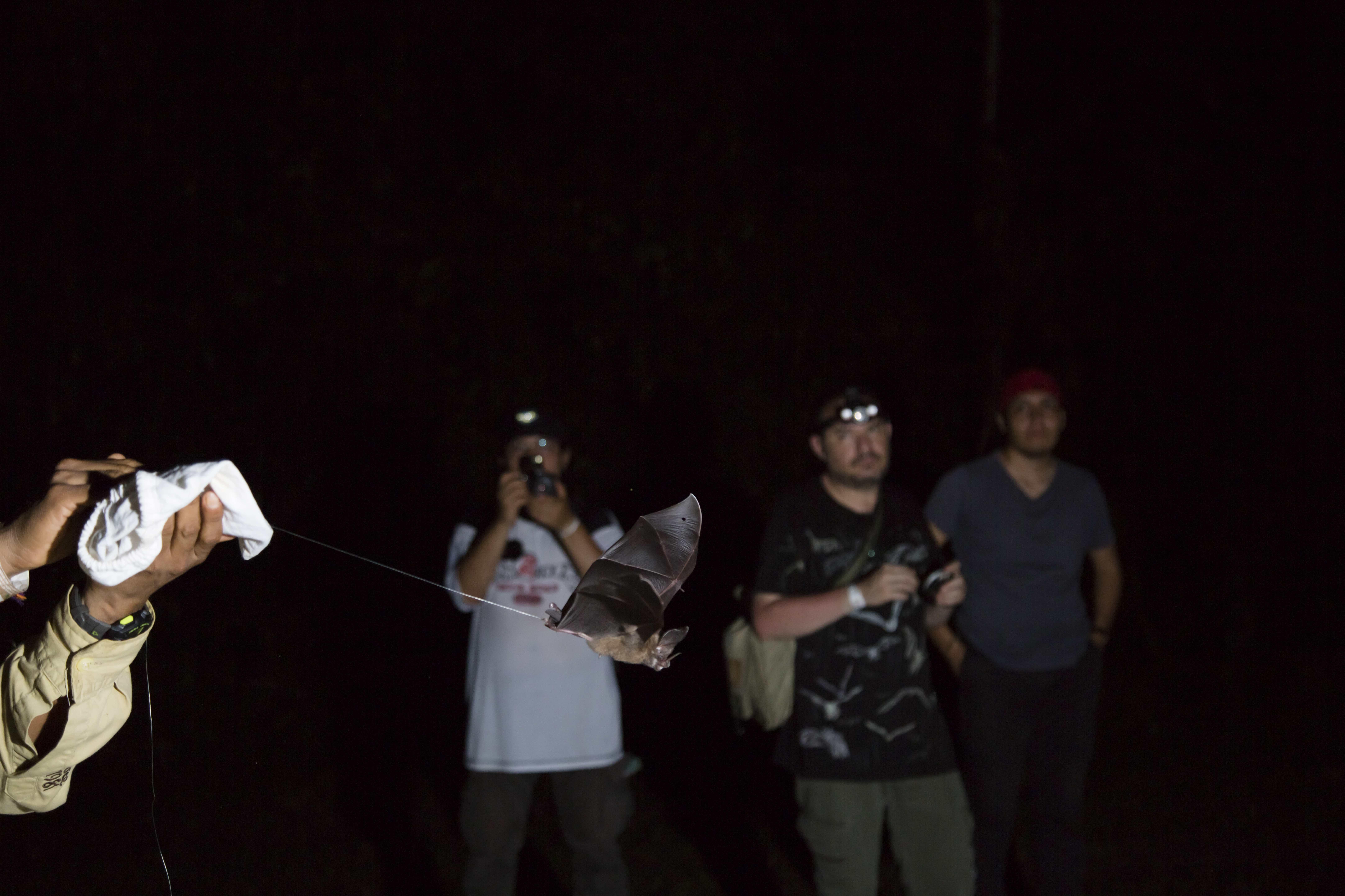 Proyecto Sonozotz-Murciélagos-México