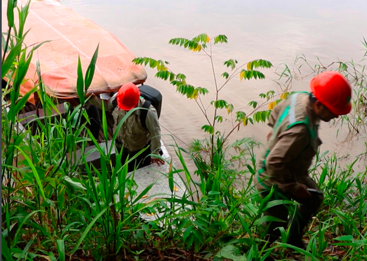 Las inspecciones de Osinfor fueron parte de las acciones para detectar la madera ilegal durante la Operación Amazonas. Foto: Osinfor.
