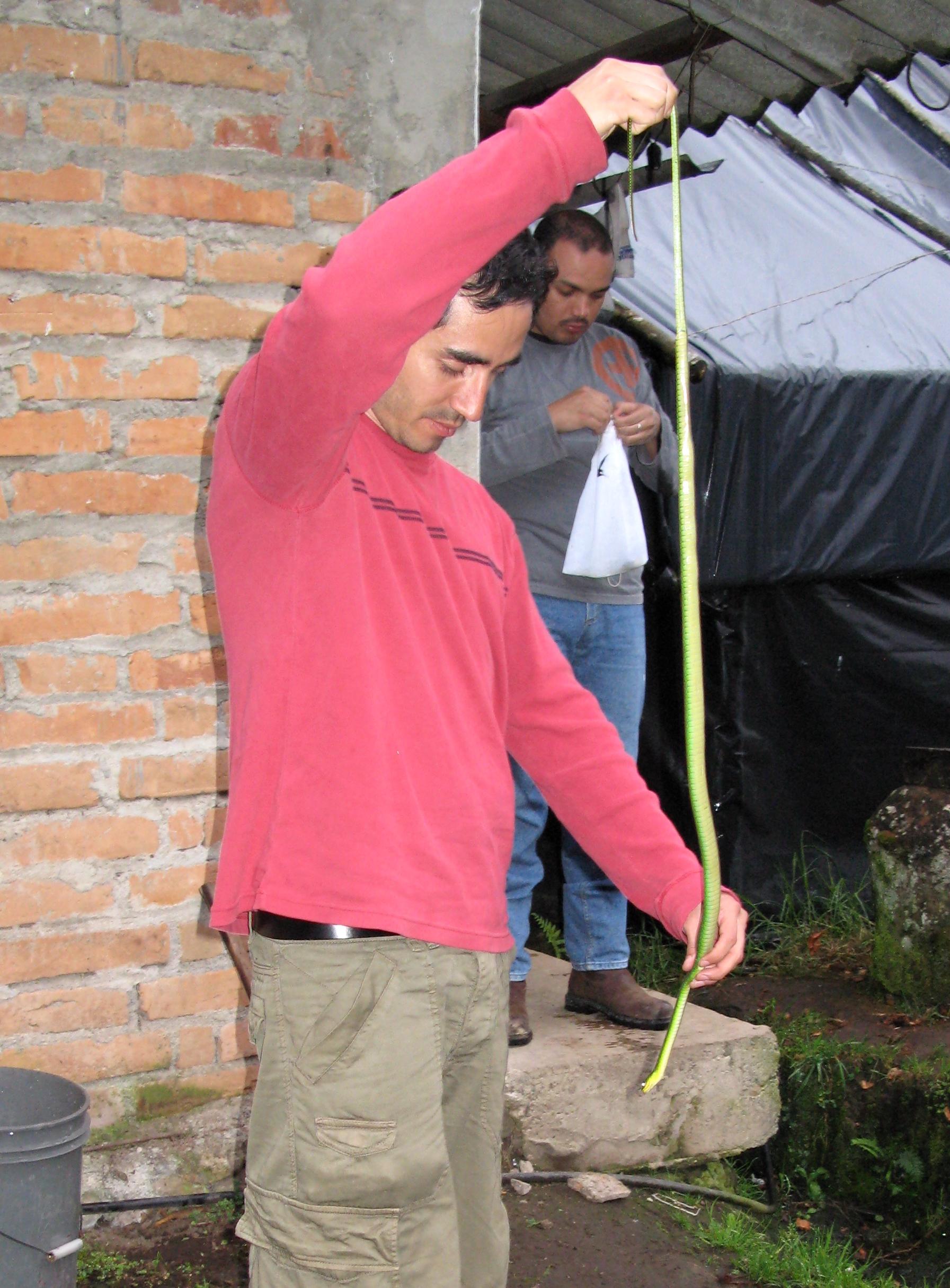 Día internacional de las serpientes. El herpetólogo Omar Torres es uno de los científicos que más trabaja con serpientes en Ecuador. Foto: Omar Torres.