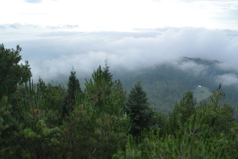 Nuevo San Juan Parangaricutiro-Michoacán-Manejo forestal comunitario