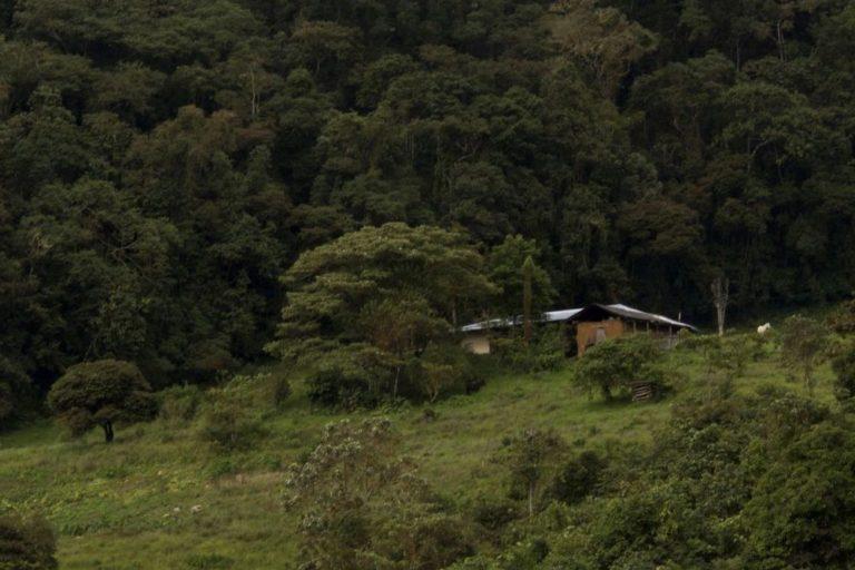 La casa de la familia Rimarachín, en las alturas de Bagua Grande, donde crearon su ACP Bosque Berlín. Foto: Conservamos por Naturaleza.