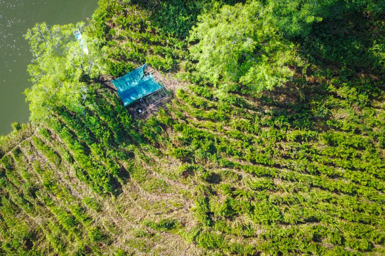 Humedal Nacional Terraba Sierpe