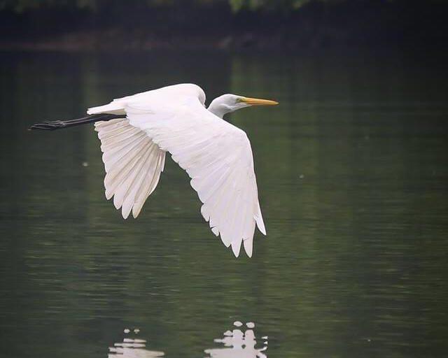 Un ave alza vuelo en el Parque Nacional Natural Uramba Bahía Málaga. Foto: Héctor Montaño.