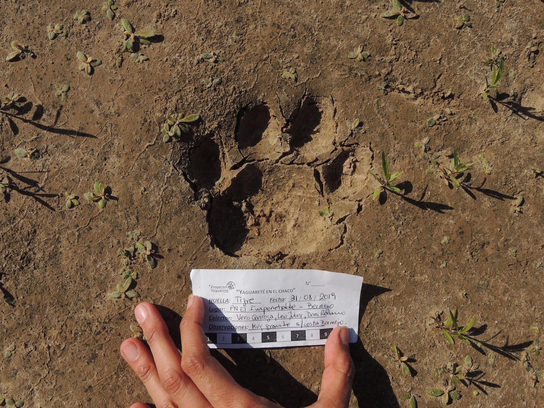 jaguares veronica quiroga