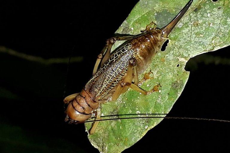 En Yátaros se están llevando a cabo una de las pocas investigaciones sobre actividad sonora de insectos. Foto: Cortesía de Reserva Natural Los Yátaros.