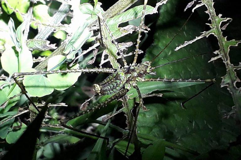 En esta área protegida privada se está haciendo un intenso trabajo en el estudio de insectos. Foto: Cortesía de Reserva Natural Los Yátaros.