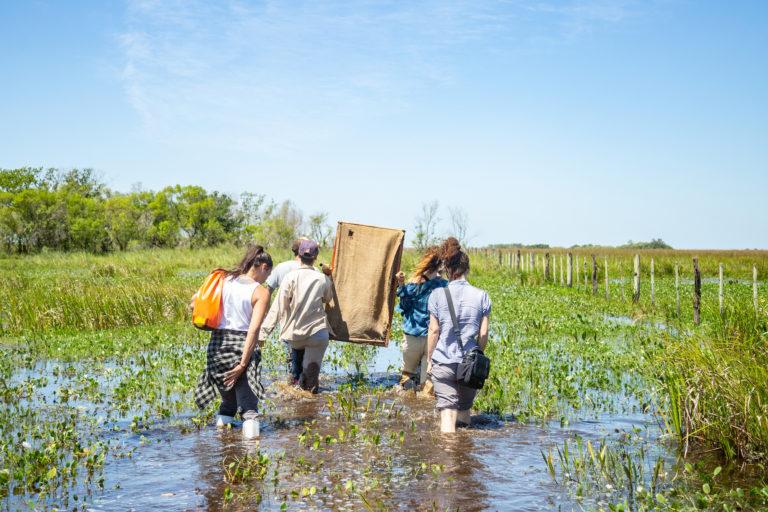 Esteros de Iberá. Guacamayos prontos a su liberación en los Esteros de Iberá. Foto: Matias Rebak - Tompkins Conservation.