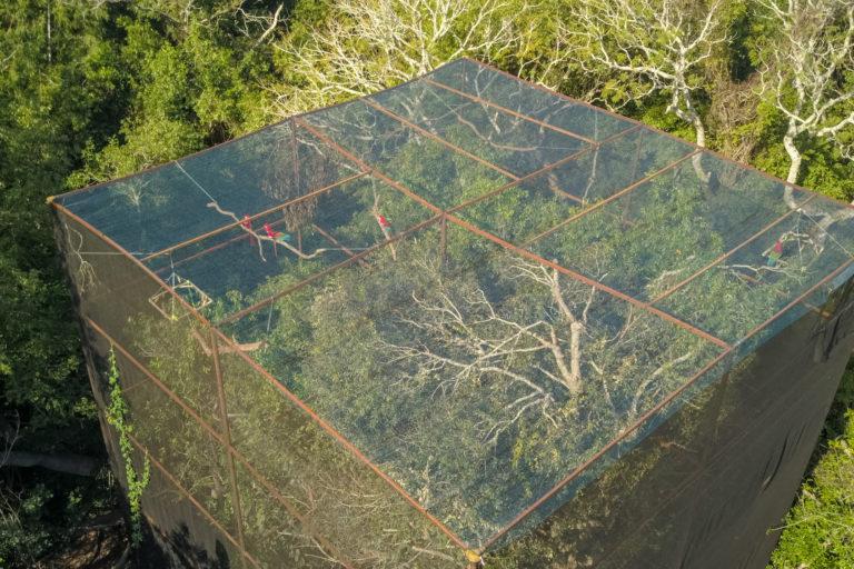 Esteros de Iberá. Lugar donde se recuperan los guacamayos previo a su liberación. Foto: Matias Rebak - Tompkins Conservation.