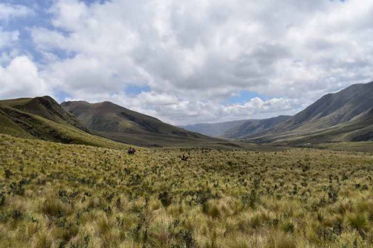 Nueva área protegida Ecuador. Ichubamba Yasepan es la segunda área protegida privada del Ecuador y la número 60 en formar parte del Sistema Nacional de Áreas Protegidas. Foto: Cooperativa Ichubamba Yasepan