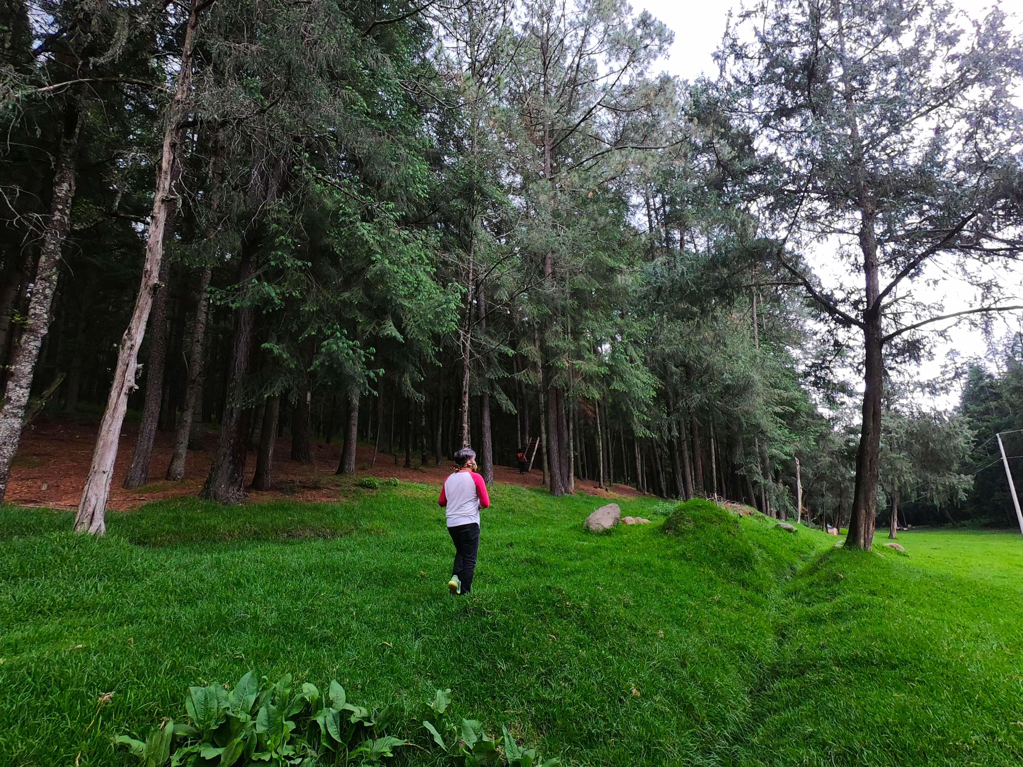 Bosque de Piedra Canteada, en Tlaxcala, México
