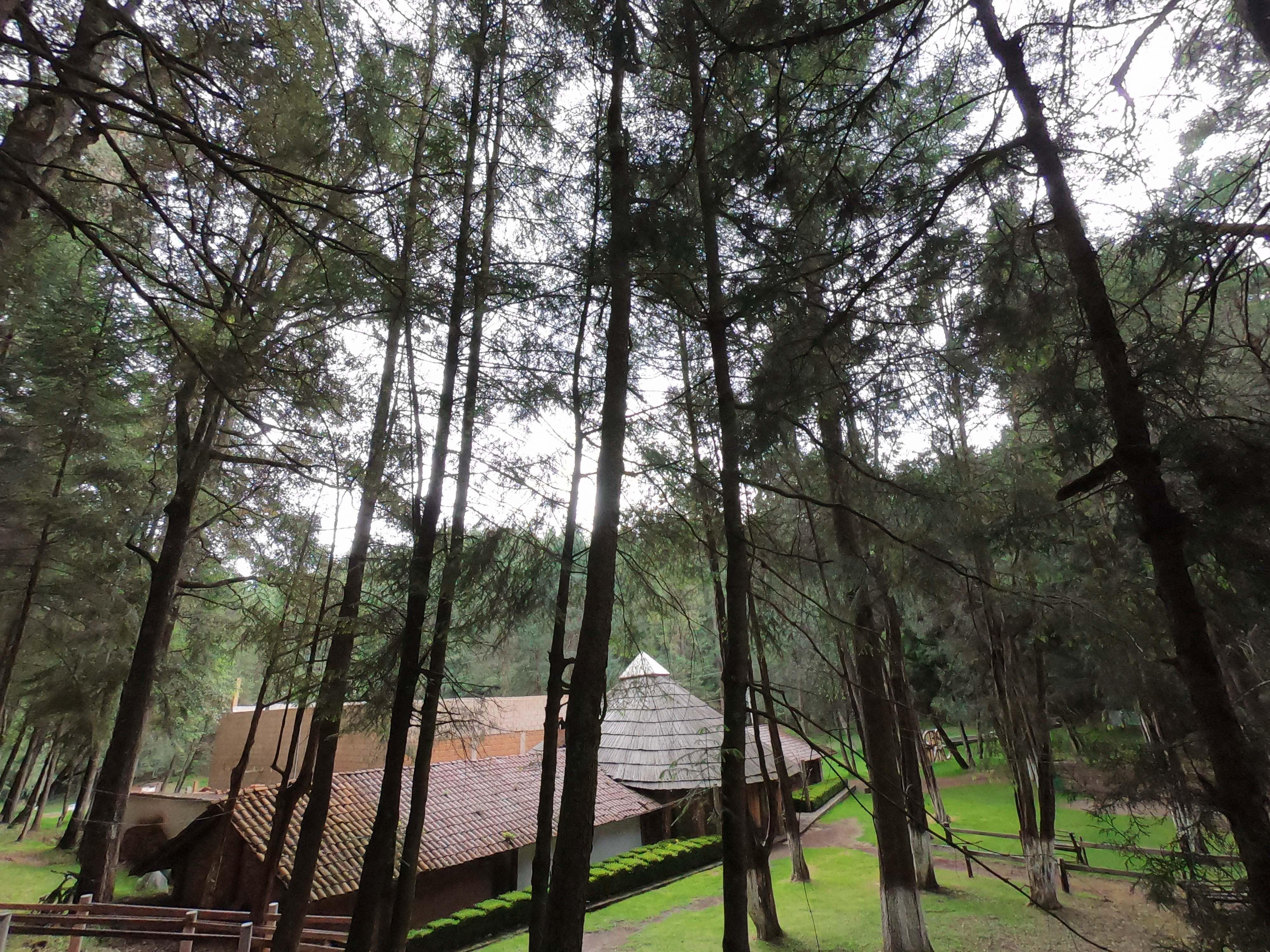 Bosque de Piedra Canteada, en Tlaxcala, México.