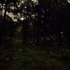 Luciérnagas en bosque Piedra Cantedad, en Tlaxcala