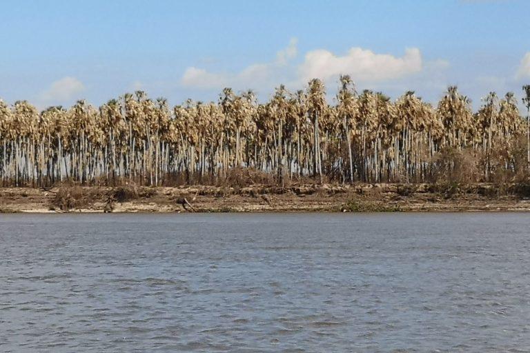 Palmar afectado por los incendios en la ribera del lado brasileño, a orillas del río Paraguay - Foto: Fundación Nativa.
