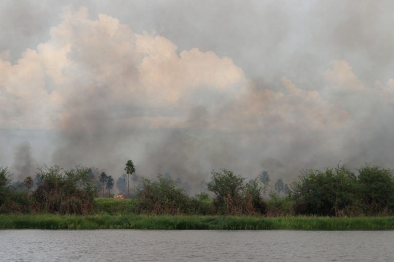 Incendio forestal en la ribera del río Paraguay. Foto: Tati Gallupi / Guyra Paraguay.