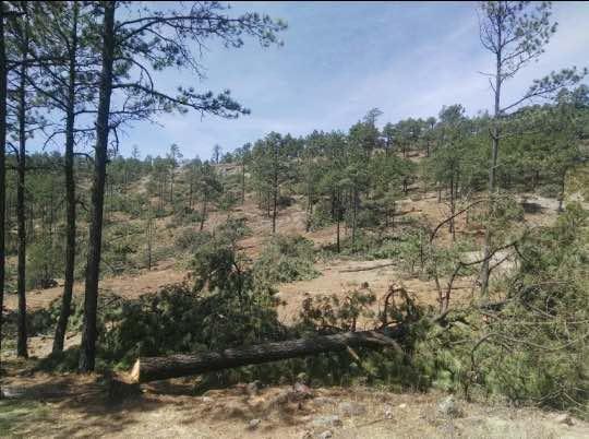 Bosques de San Elías Repechique, Chihuahua
