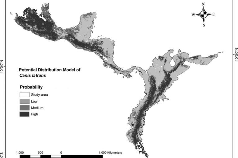 Coyotes en América. Modelo de distribución potencial del coyote y la principal ruta de expansión entre Centroamérica y el norte de Sudamérica. Mapa: Paper: Coyote (Canis latrans) in South America: potential routes of colonization.