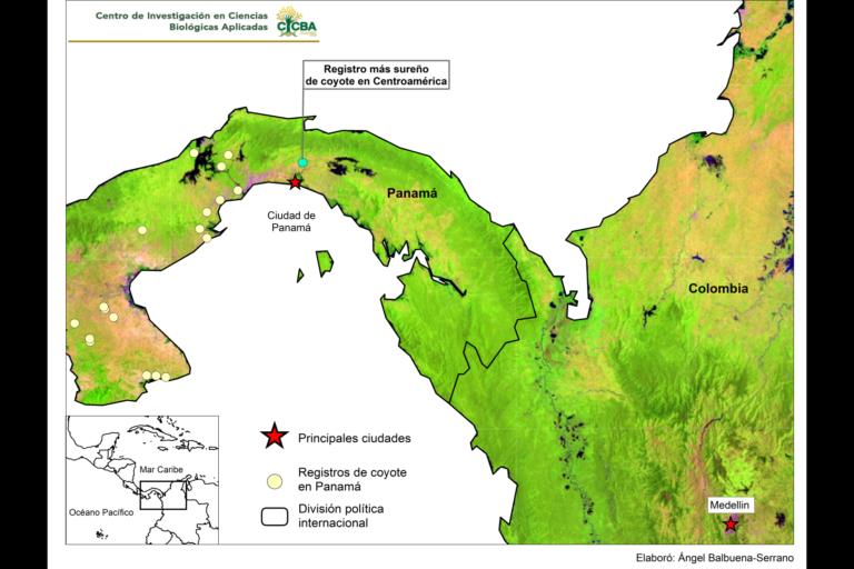 Coyotes en América. Registros de coyote en Panamá a 2018. Mapa: Centro de Investigación en Ciencias Biológicas Aplicadas de la Universidad Autónoma del Estado de México.