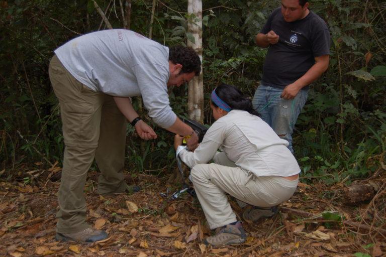 Coyotes en América. Cámaras trampa para captar al coyote en Costa Rica. Foto: José Fernando González-Maya.