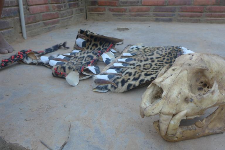 jaguares en bolivia