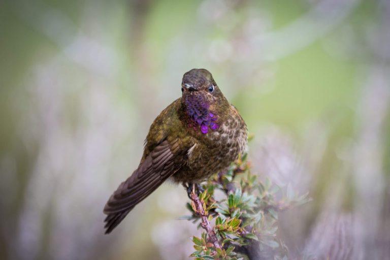 Bomberos en el parque Cajas. El Parque Nacional Cajas es un área es un área IBA (Área Importante para la Conservación de Aves), es decir, es un refugio para la conservación de aves de páramo. Xavier Bravo Fotografía.