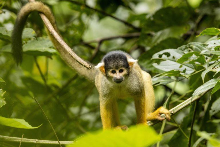 Dia Internacional de los Primates
