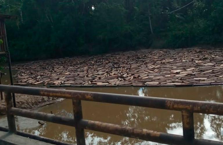 Tala ilegal en Ecuador. Madereros usan el río Shiripuno para movilizar balsa que talan ilegalmente de territorios de comunidades waorani que viven en el margen del afluente. Los troncos llegan hasta el puente en la vía Auca, donde son represados a la espera de ser cargados para su comercialización. Foto: Amazon Frontlines.