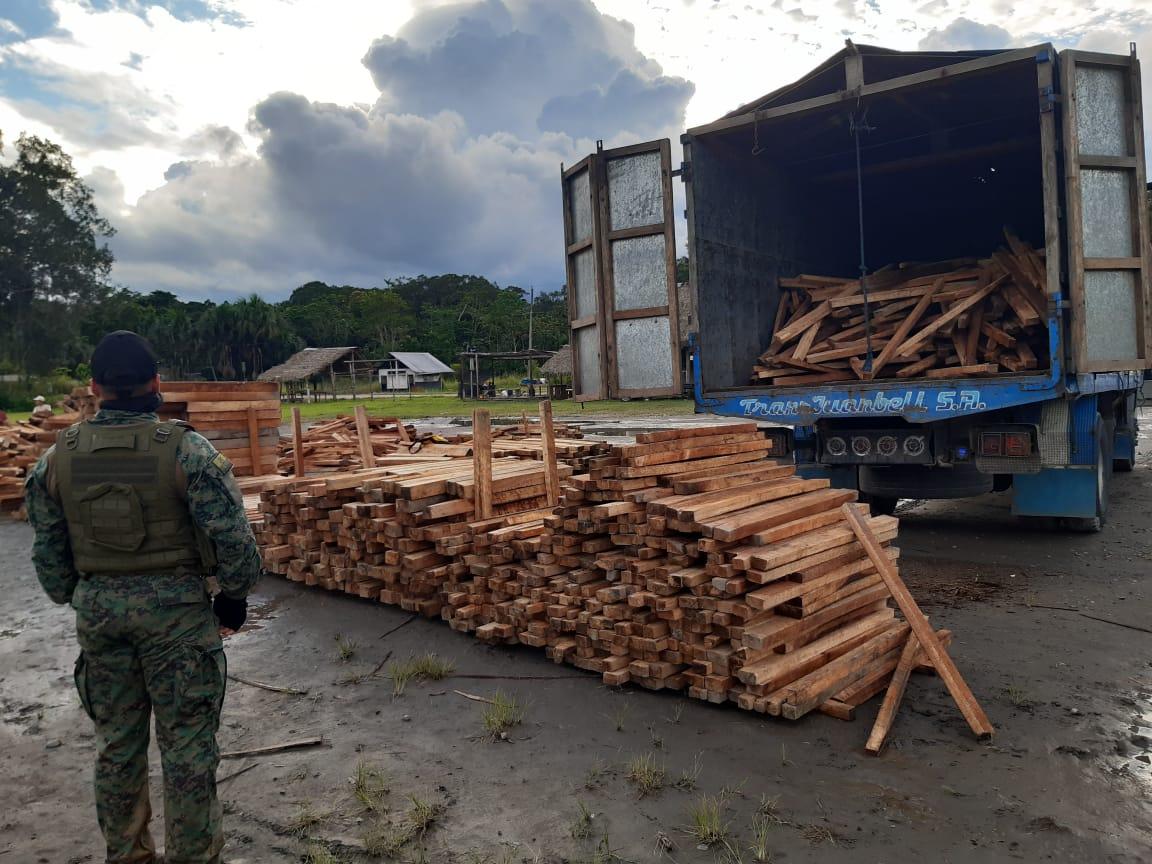 Tala ilegal en Ecuador. En un operativo en el que participaron Guardaparques del Yasuní, Fuerzas Armadas y Policía Ambiental, fue retenido un camión con 25 metros cúbicos de balsa en la parroquia Pompeya a mediados de junio 2020. Foto: MAE Orellana