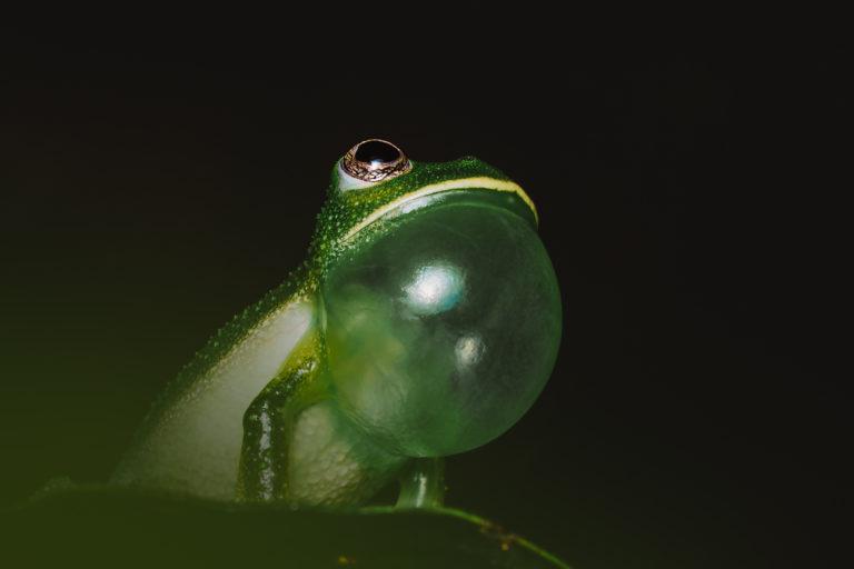 Foto: Jhonattan Vanegas - Keeping Nature.