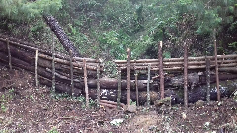 Bosques de la sierra de Guerrero